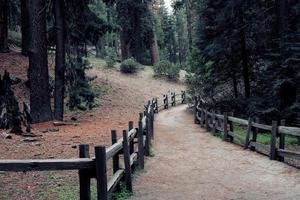 clôture en bois brun sur chemin de terre photo
