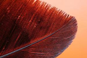 illustration de plumes rouges et noires
