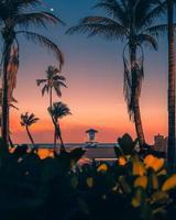 silhouette de palmiers avec une maison bleue photo