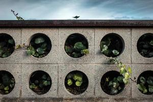 plantes en jardinière en béton