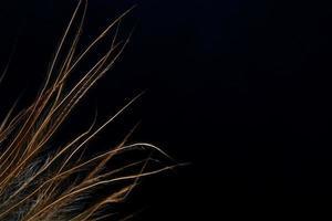 bouts de plumes marron sur fond noir