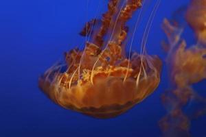 méduse sous l'eau
