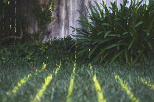 la lumière du soleil brille sur l'herbe à travers une clôture photo