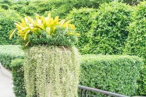 bouquet d'arbre en pot photo