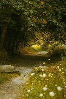chemin à travers la forêt photo