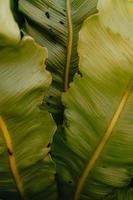 feuilles vert clair photo