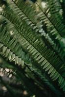 belles plantes de fougère verte photo