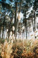 vue au sol sur les arbres près de la plage photo