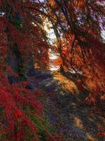 sentier entre les arbres d'automne