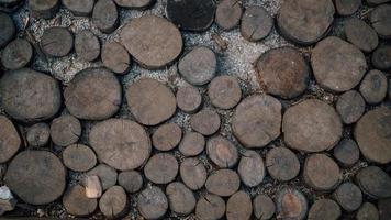 lot de tronc d'arbre coupé