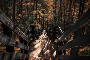 escaliers en bois dans la forêt photo