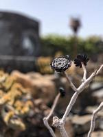 fleur succulente sur branche photo