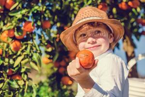 Portrait of attractive young boy picking mandarins à agrumes photo