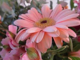 illustration de fleur photo