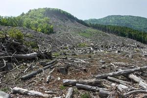 la déforestation photo