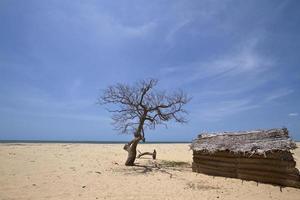 Cabane de pêcheurs à Polmoddai, Sri Lanka photo