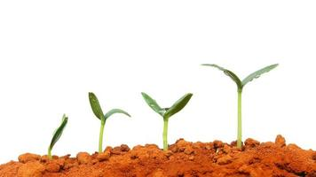 plante en croissance photo