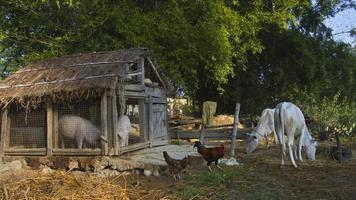 animaux domestiques de la ferme dans une ferme traditionnelle