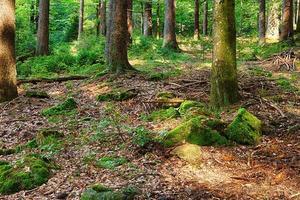 la forêt primitive photo
