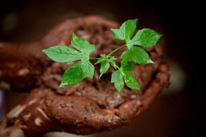 bébé plante-nouvelle vie photo