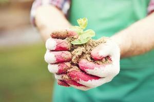 jeune plant en coupe dans les mains