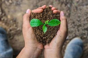 mains tenant une jeune plante photo