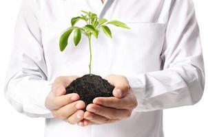 tenant une plante photo