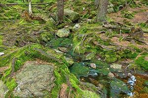 la forêt primitive avec le ruisseau - hdr photo