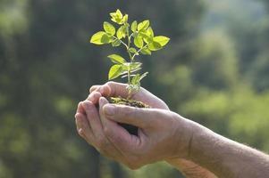 deux mains prenant un jeune arbre photo