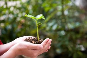 plante dans la main photo