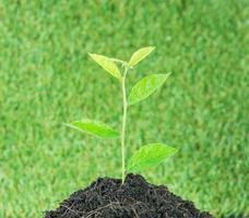 Jeune petite plante verte nouvelle vie photo