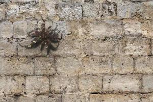 araignée?