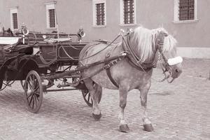 cheval et calèche sur la place du château; Varsovie