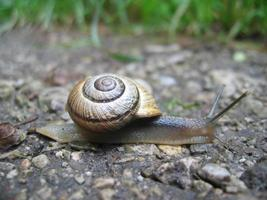 escargot macro photo