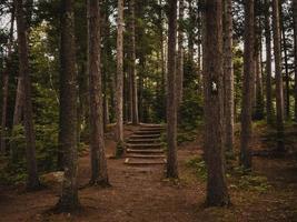 escaliers passant entre les arbres