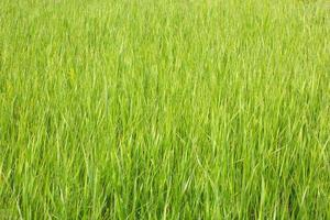vue sur l'herbe avec une faible profondeur de champ photo