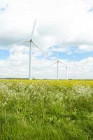 Groupe d'éoliennes dans le champ de colza photo