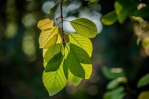 gros plan, vert, feuilles