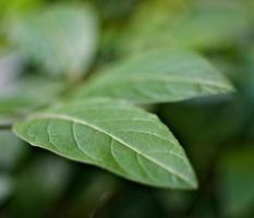 plante feuille verte