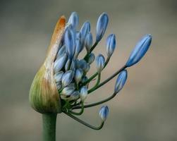 boutons floraux dans l'objectif tilt shift photo