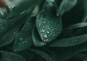 gouttes deau sur une plante à feuilles vertes photo