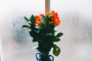 fleurs orange dans un vase bleu photo