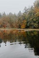 arbres au bord d'un lac