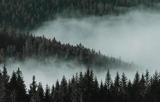 vue à vol d'oiseau des pins photo