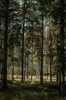 arbres verts et bruns pendant la journée