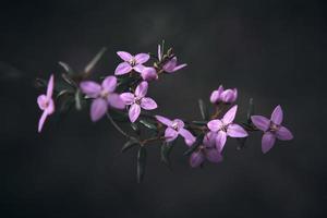 macro photographie de fleurs