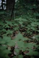 herbe verte sous les arbres en forêt
