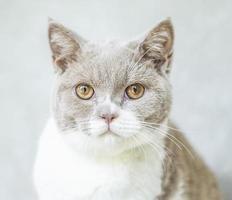 gros plan photo de chat