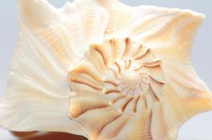 coquillage sur fond blanc