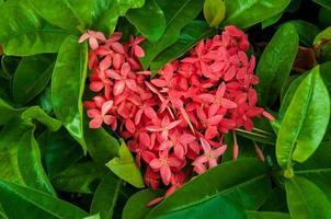 coeur de fleurs avec fond de feuille verte photo